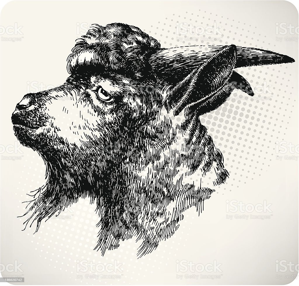 Black horned goat, hand-drawing. Vector illustration royalty-free stock vector art