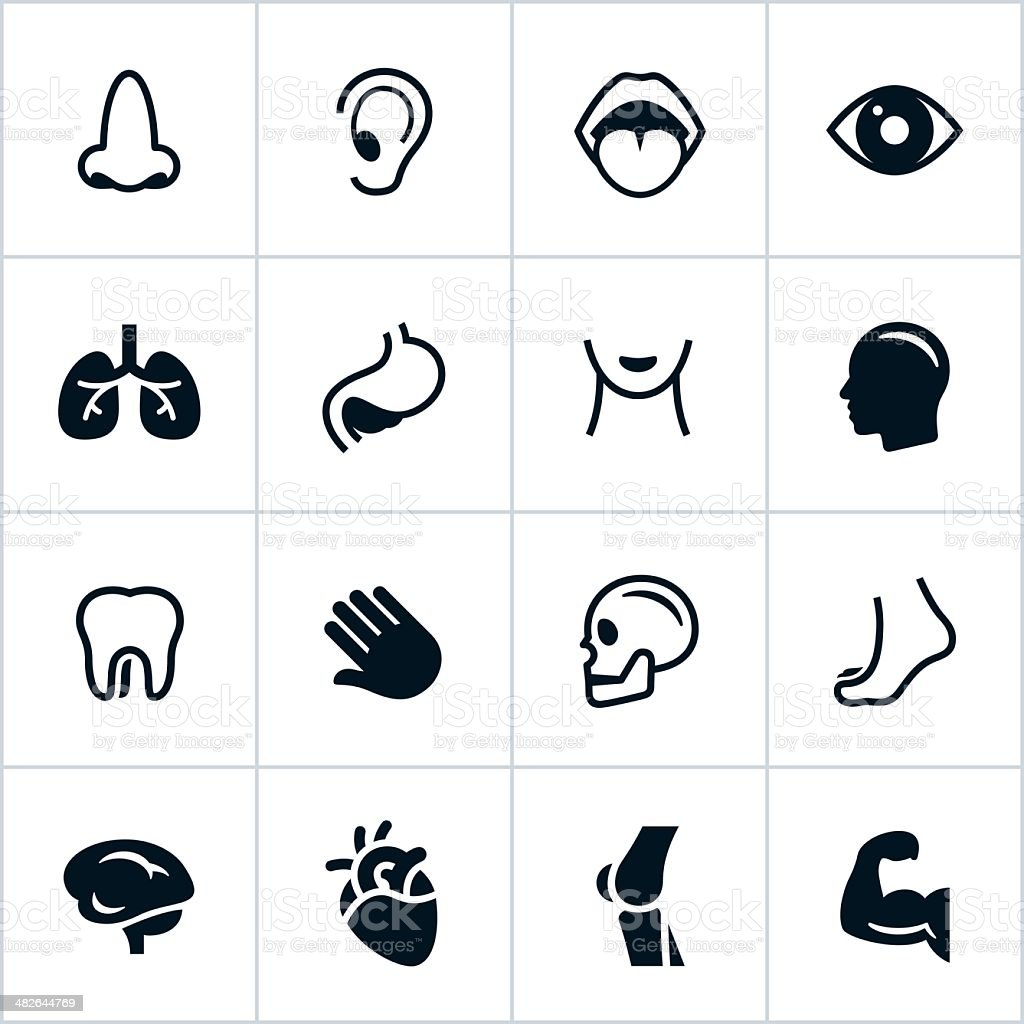 Black Human Anatomy Icons vector art illustration