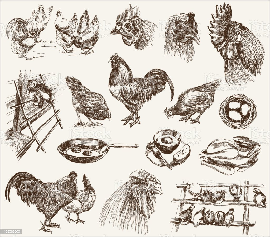 Black ink sketches of chicken breeding concepts vector art illustration