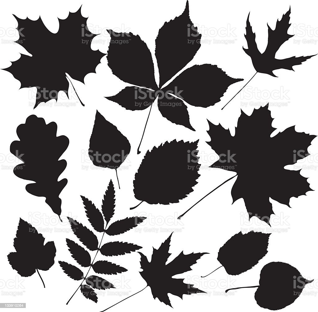 black leaves royalty-free stock vector art