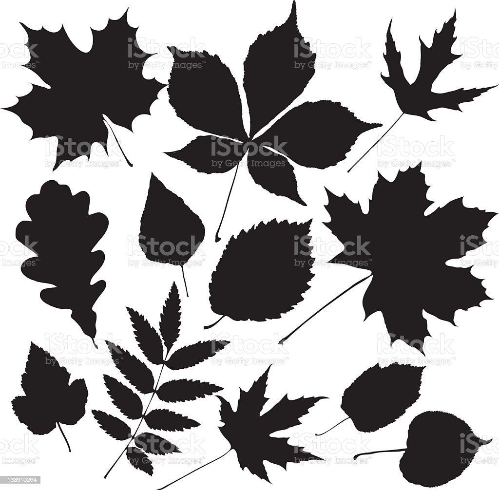 black leaves vector art illustration