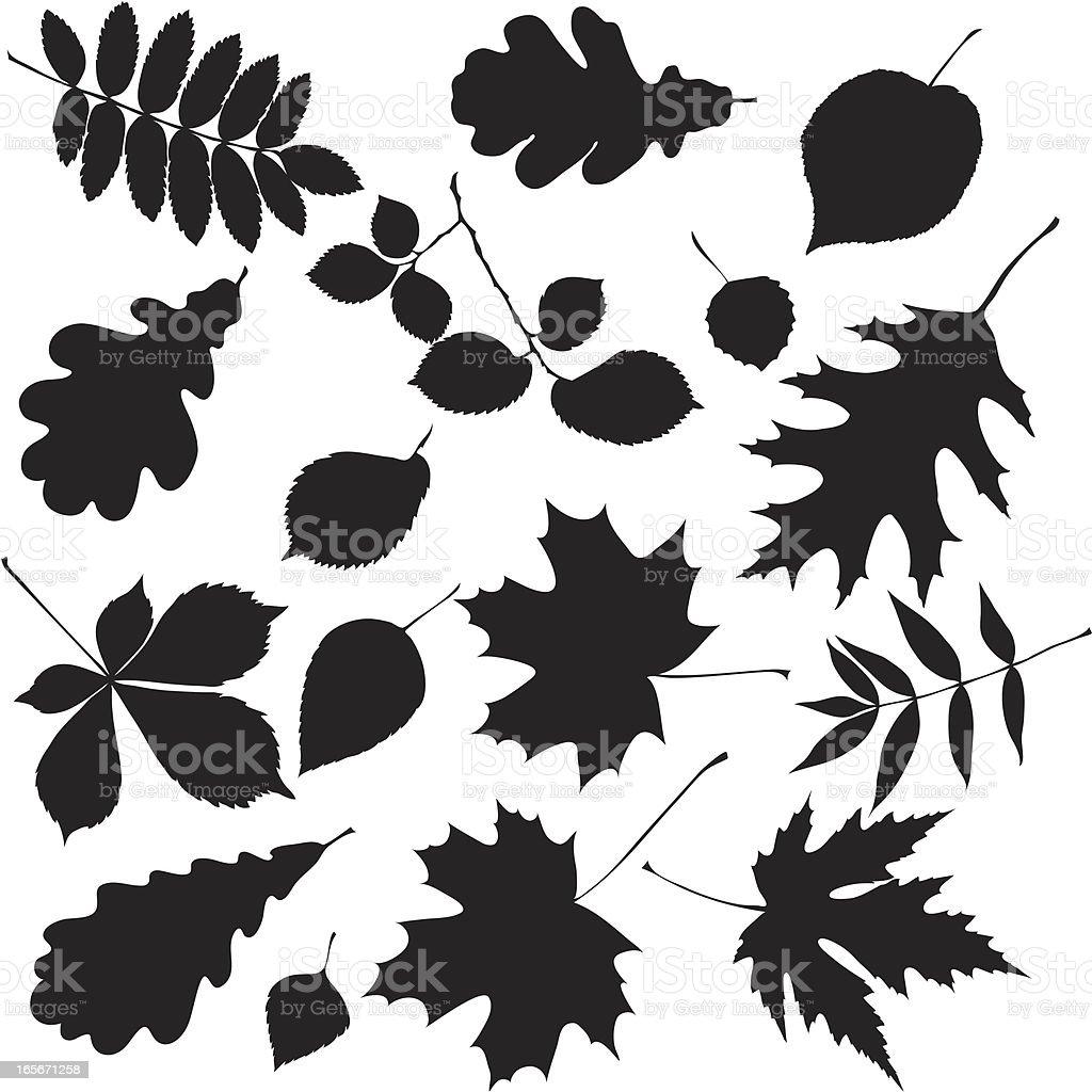 Black leaves royalty-free stock vector art