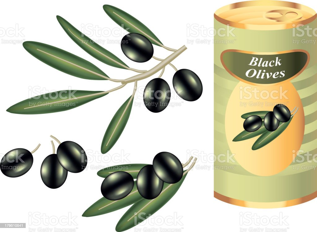 black olive branch and bank isolated on white vector art illustration