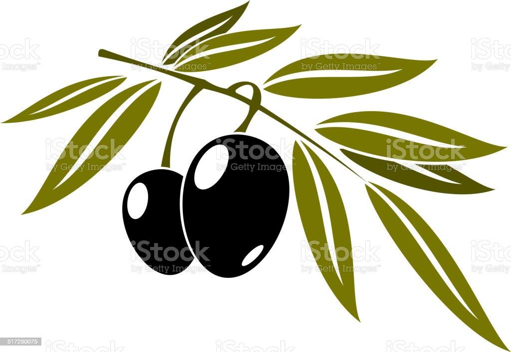 Black olives branch with leaf vector art illustration