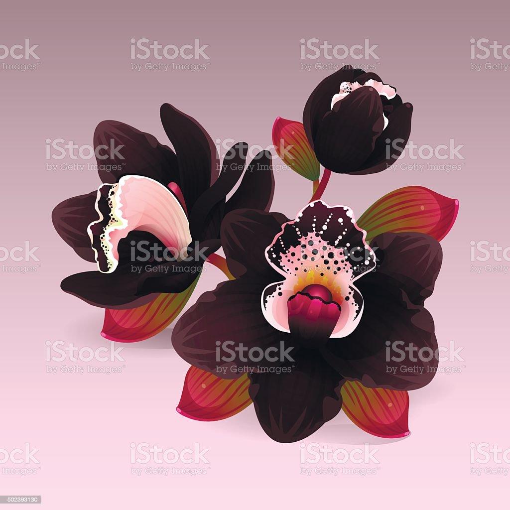 Black orchid flower vector art illustration