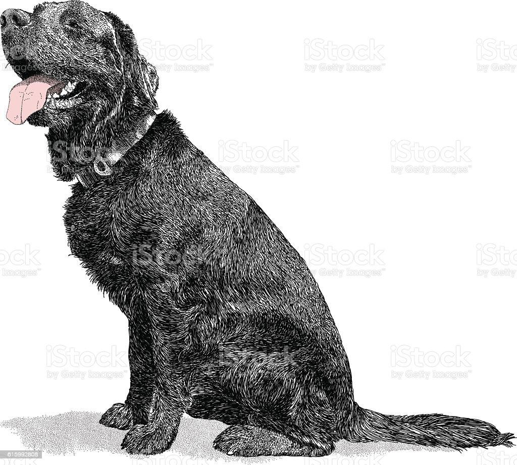 Black Retriever vector art illustration