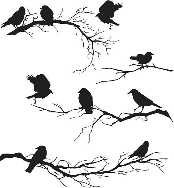 Crow Bird Clip Art, Vector Images & Illustrations - iStock