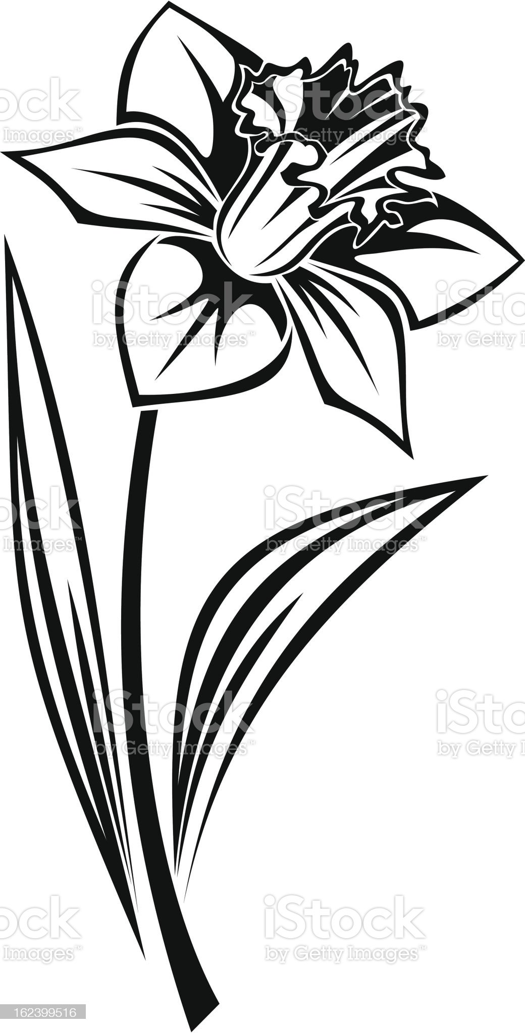 Black silhouette of narcissus flower. Vector illustration. royalty-free stock vector art