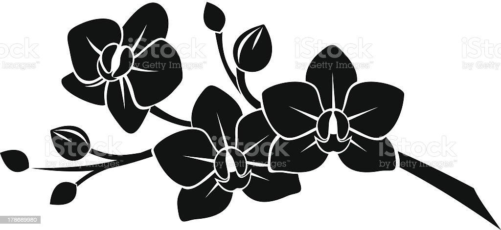Трафарет цветок орхидеи