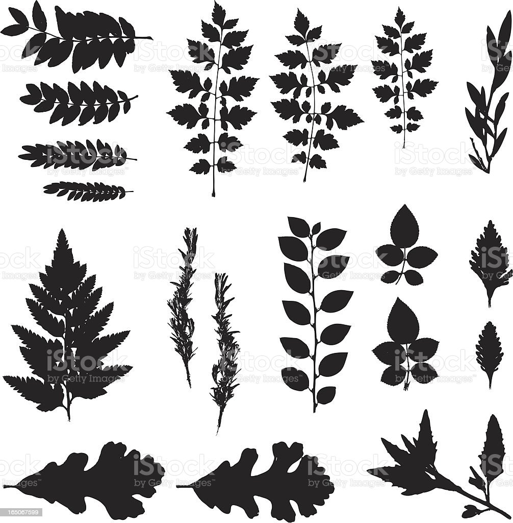 Black silhouette of various leaves on white background royalty-free stock vector art