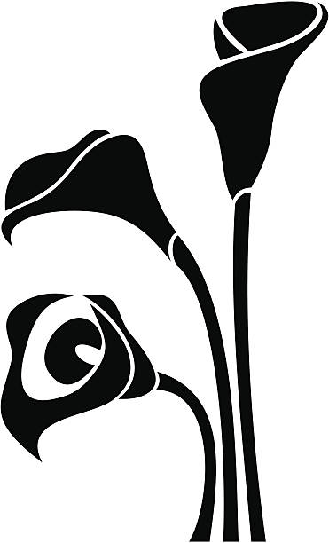 Calla Lily Clip Art, Vector Images & Illustrations - iStock