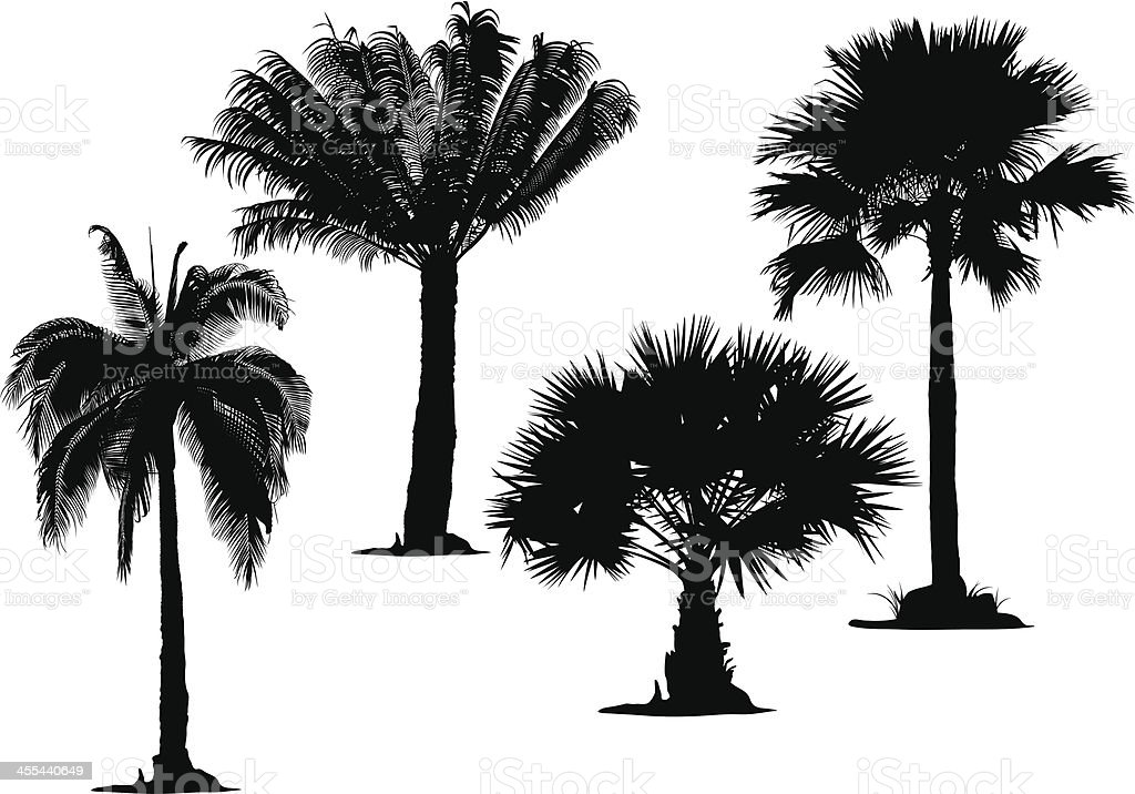 Black stylistic palm tree silhouettes on white background vector art illustration