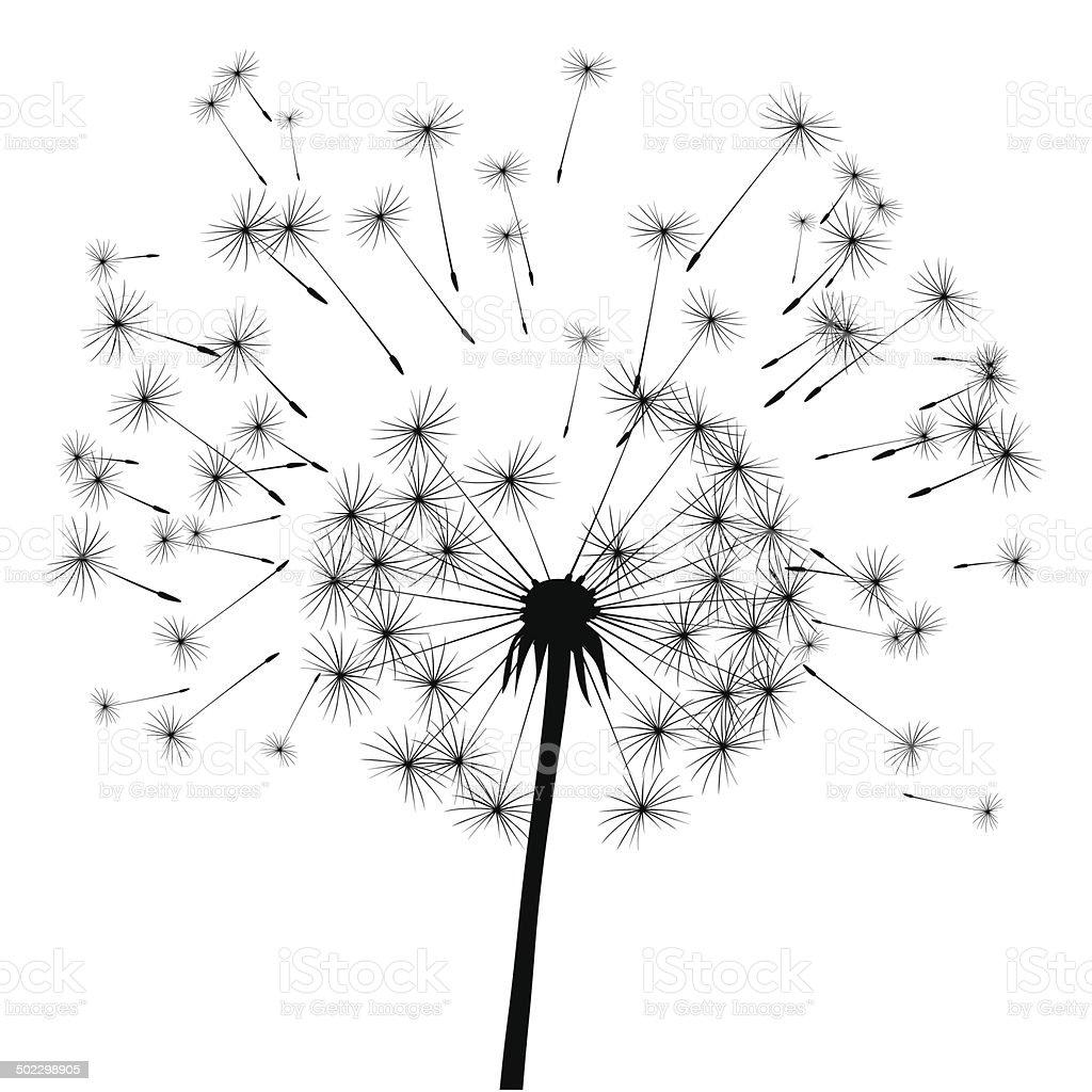 black vector dandelion vector art illustration