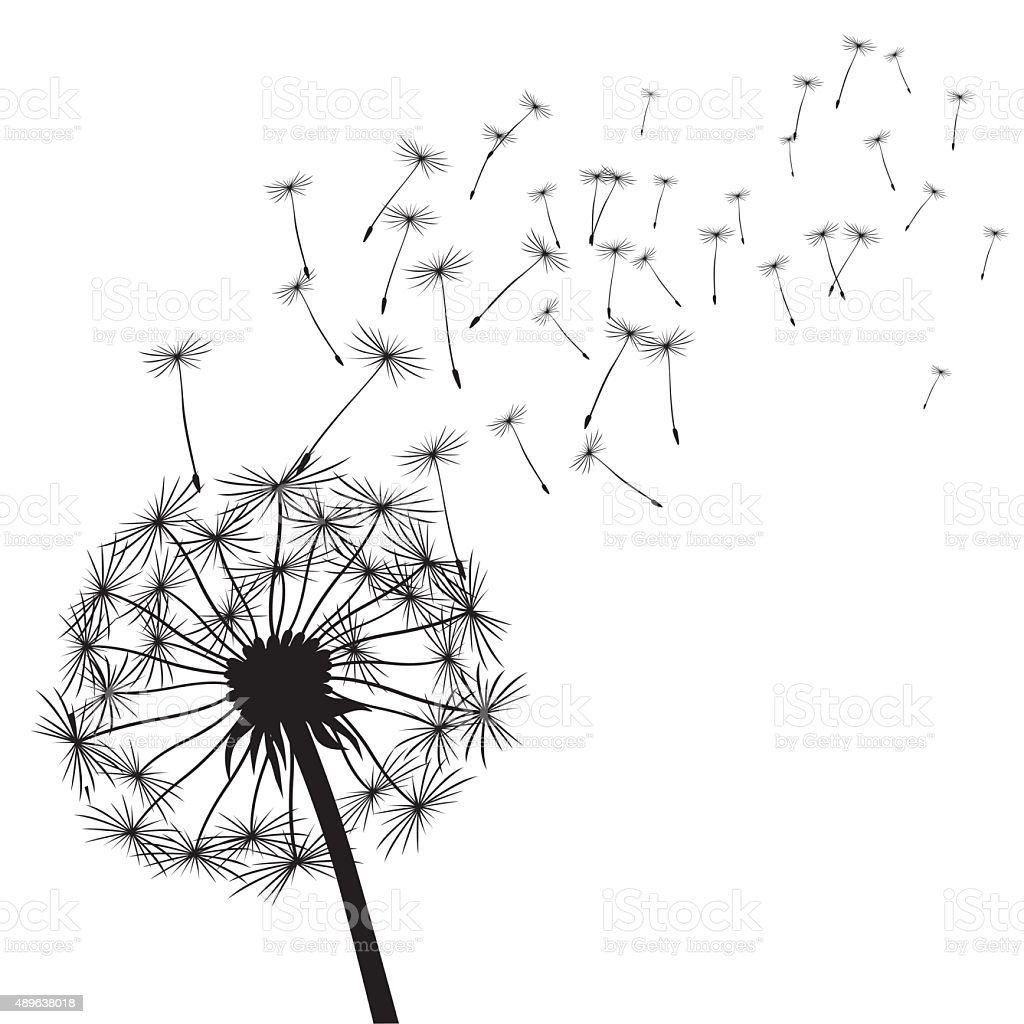 Black vector dandelions vector art illustration