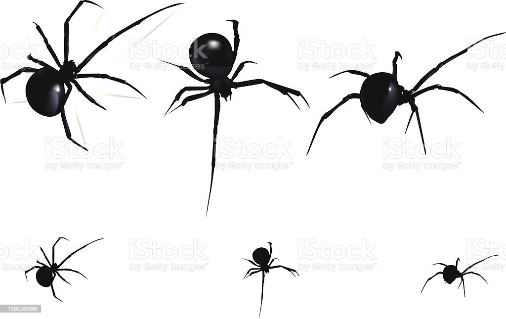 Black Widow Spider royalty-free stock vector art