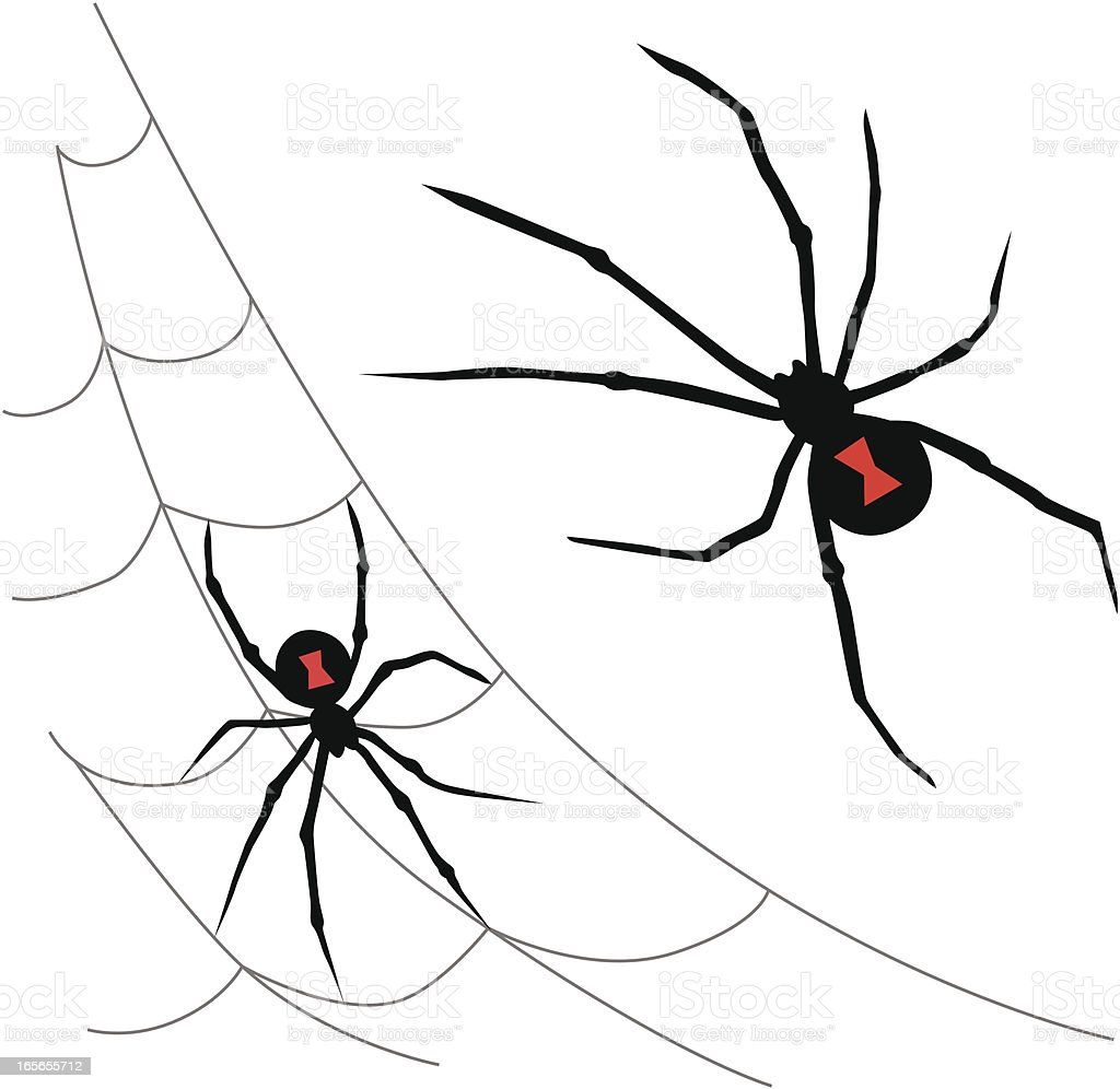black widow spiders royalty-free stock vector art