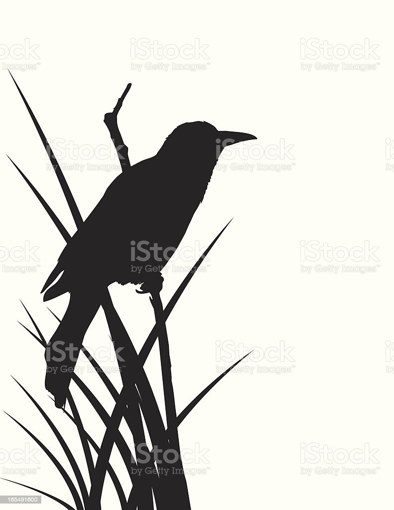 Blackbird Silhouette royalty-free stock vector art