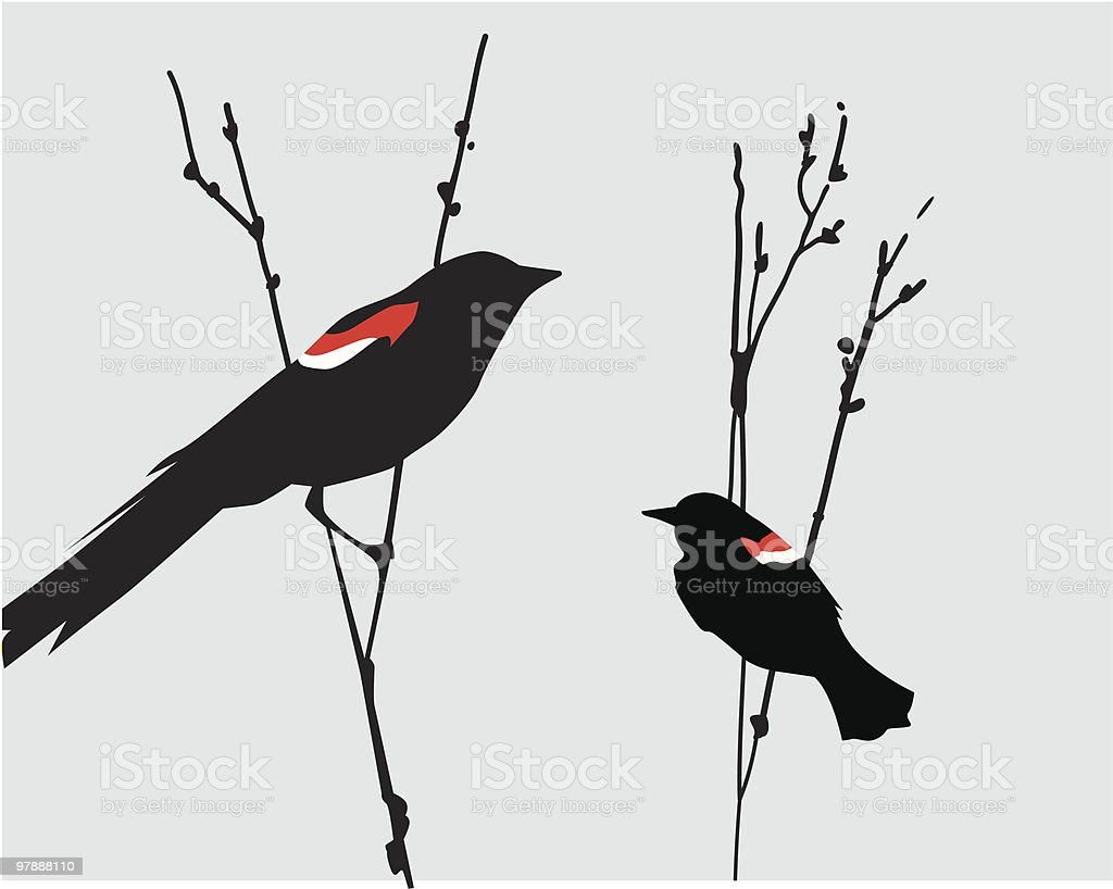 Blackbirds royalty-free stock vector art