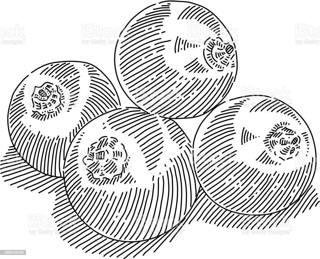 Blackcurrant Drawing vector art illustration