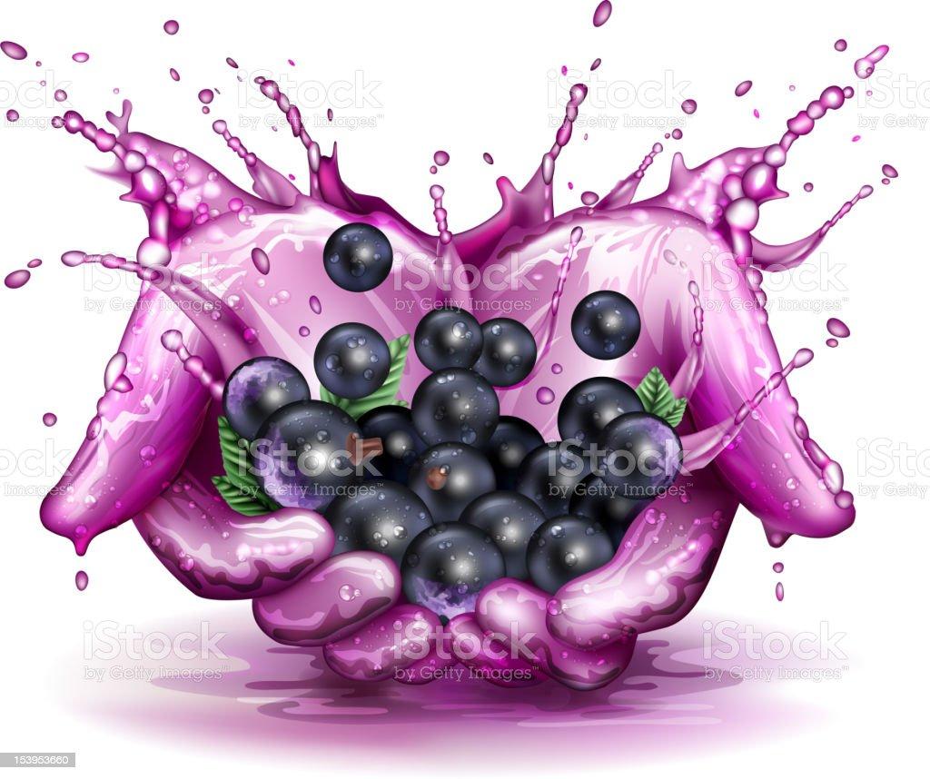 Blackcurrant splashing concept vector art illustration