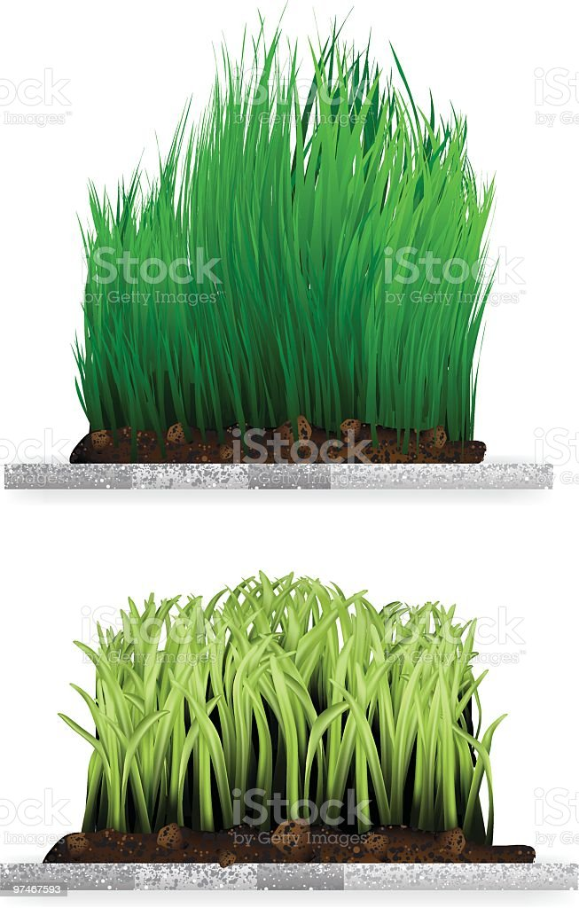 Block of Wheat Grass vector art illustration
