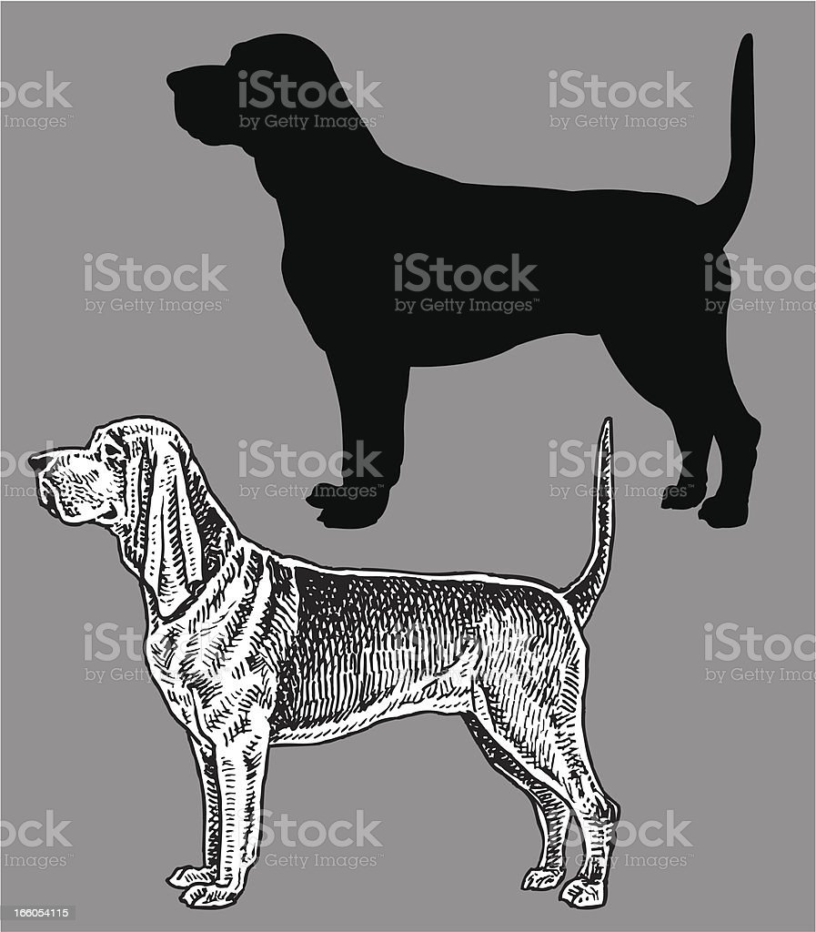 Blood Hound - Dog, domestic pet royalty-free stock vector art