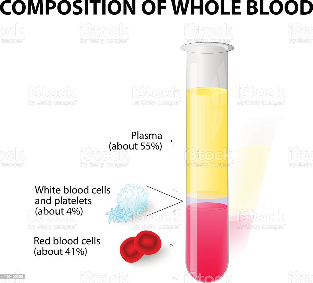 blood plasma and formed elements in Test tube vector art illustration