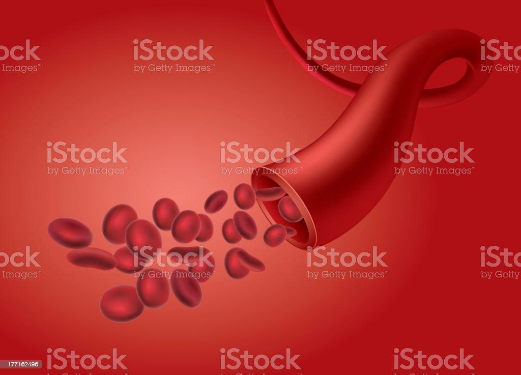 Blood Vessel vector art illustration