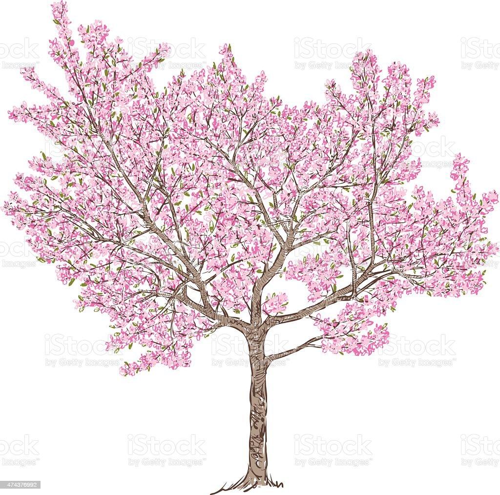 blooming cherry tree vector art illustration