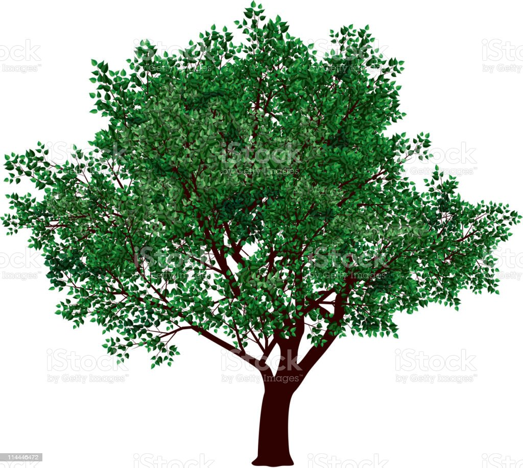 Blooming green foliage on a tree royalty-free stock vector art
