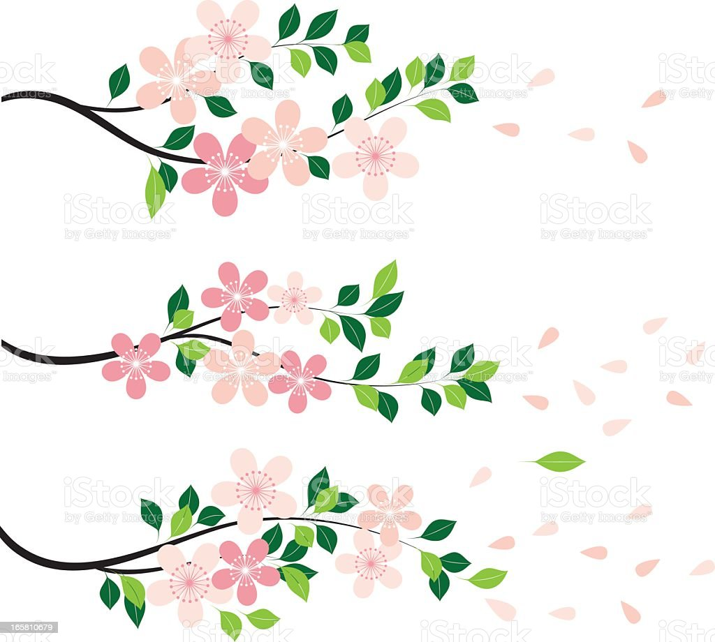 Blossom vector art illustration