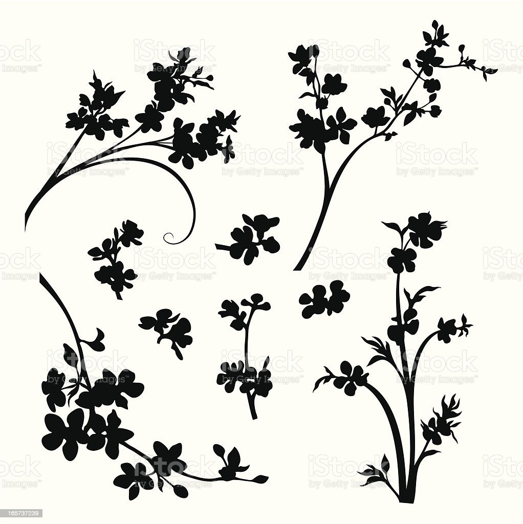 Blossomed branches and flower heads vector art illustration
