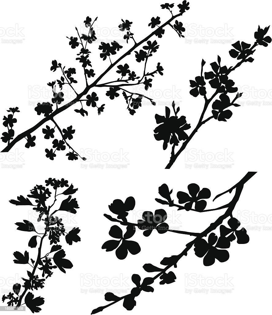 Blossomed Branches vector art illustration