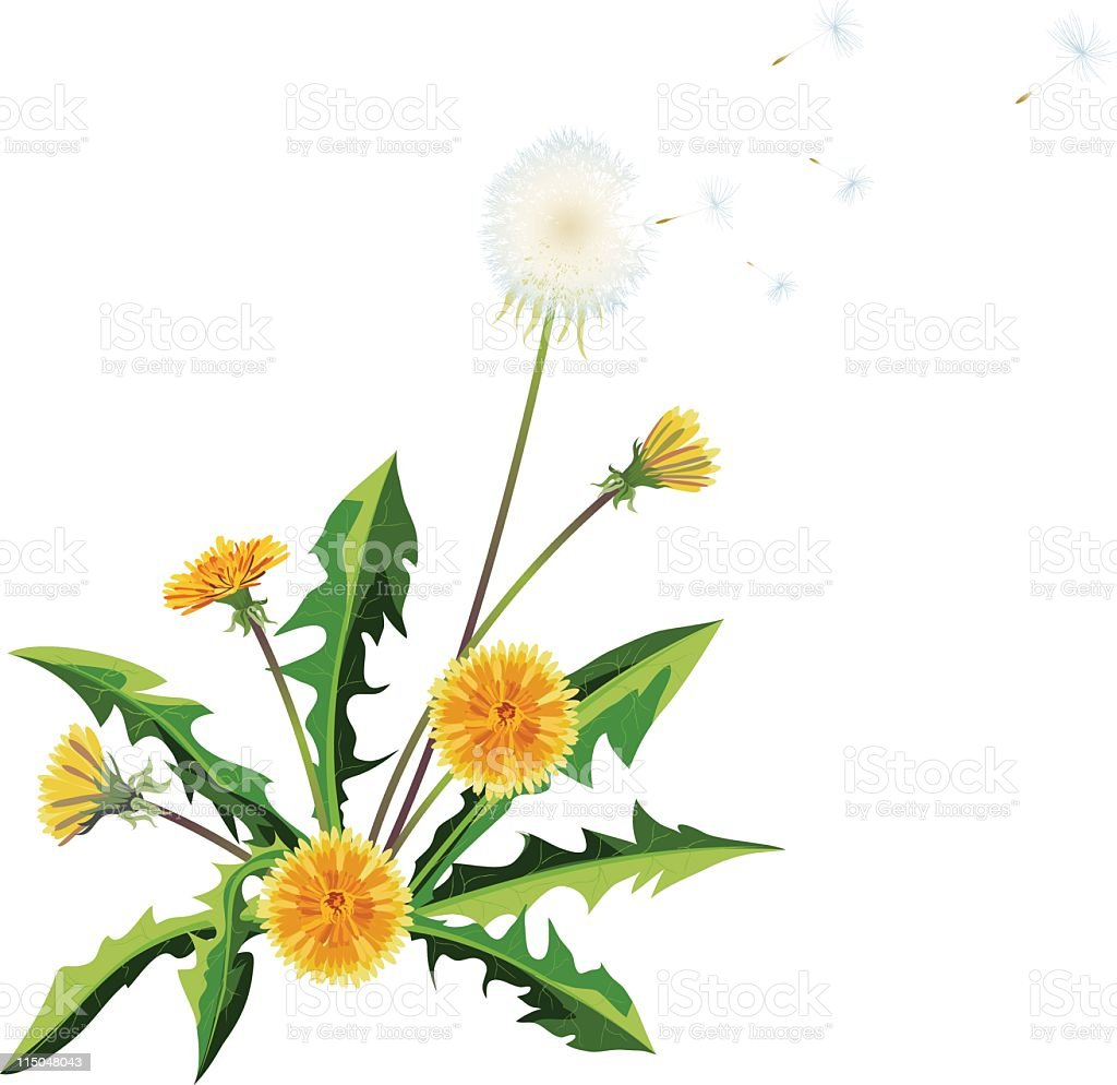 Blowing Dandelion Plant vector art illustration