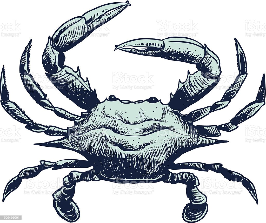 Blue Crab Sketch vector art illustration