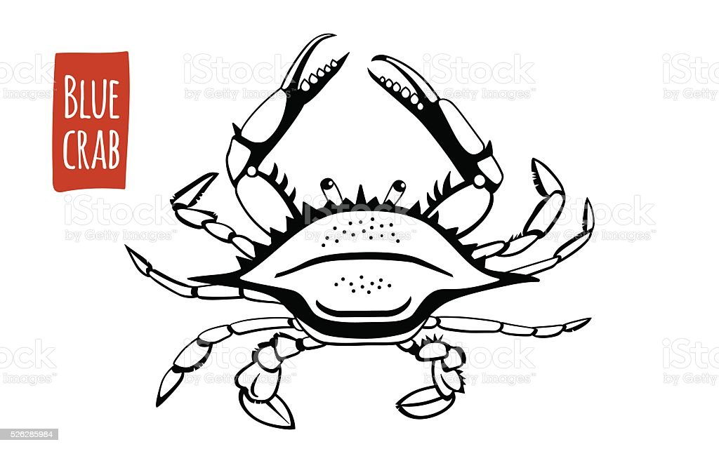 Blue Crab, vector cartoon illustration vector art illustration