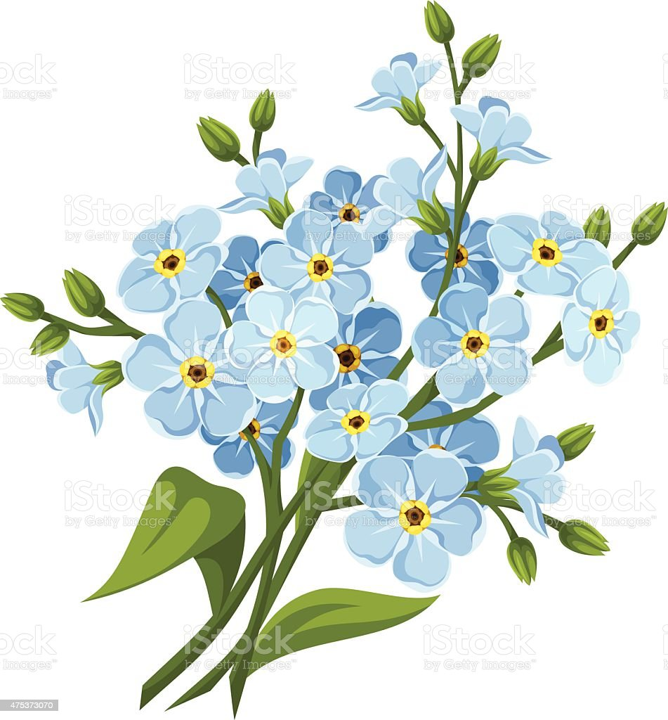 ... forget-me-not flowers. Vector illustration. vector art illustration