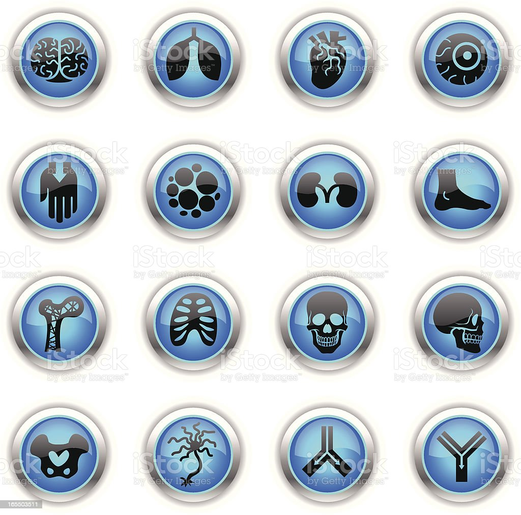 Blue Icons - Anatomy royalty-free stock vector art