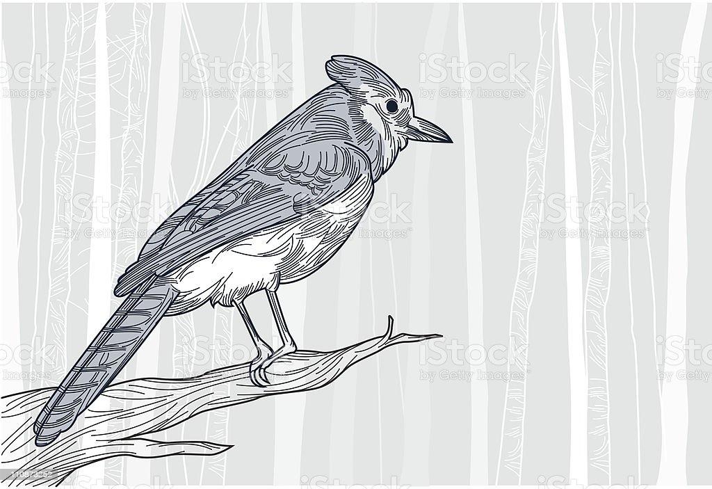 Blue Jay in Winter vector art illustration