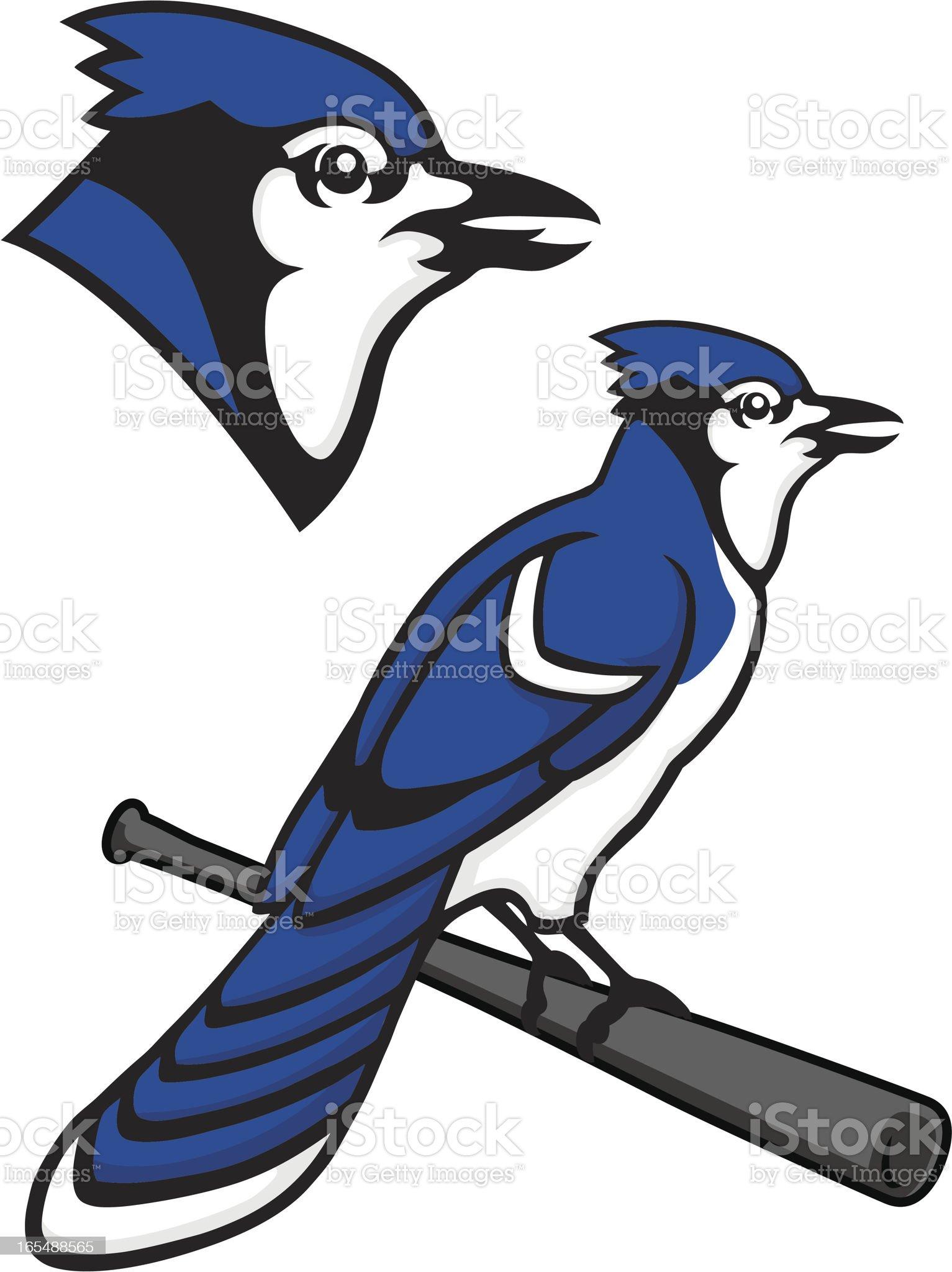 Blue Jay Mascot royalty-free stock vector art