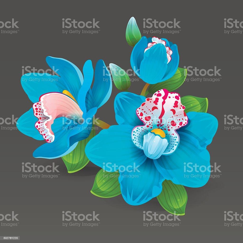 Blue orchid vector art illustration
