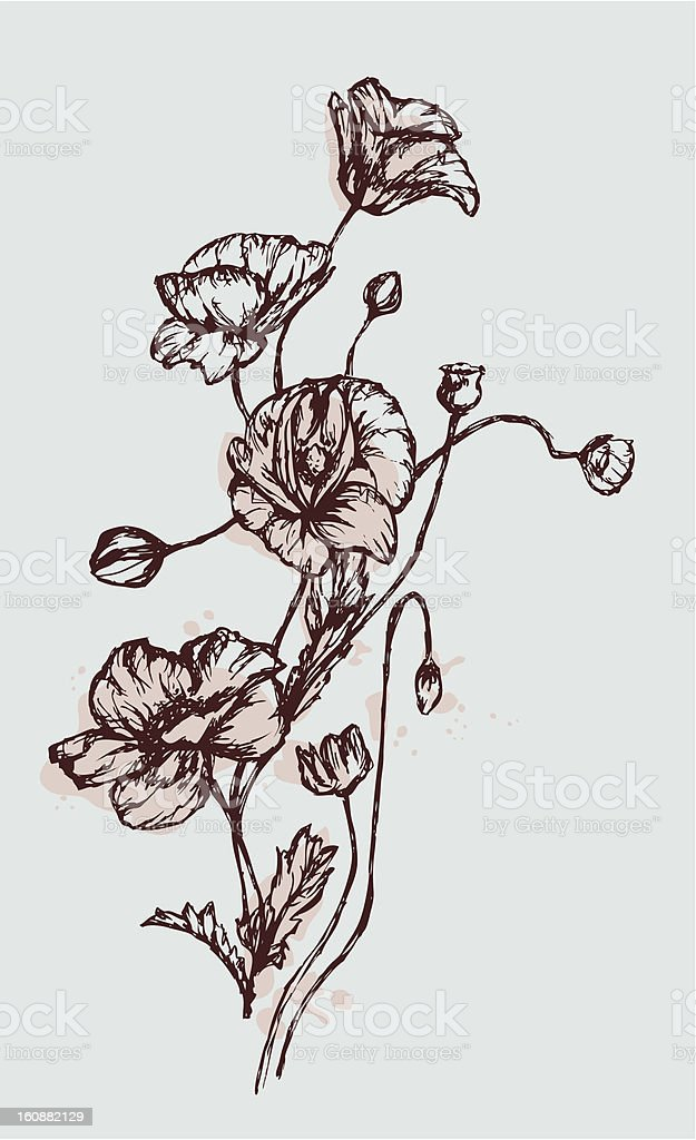 Blue Poppies royalty-free stock vector art