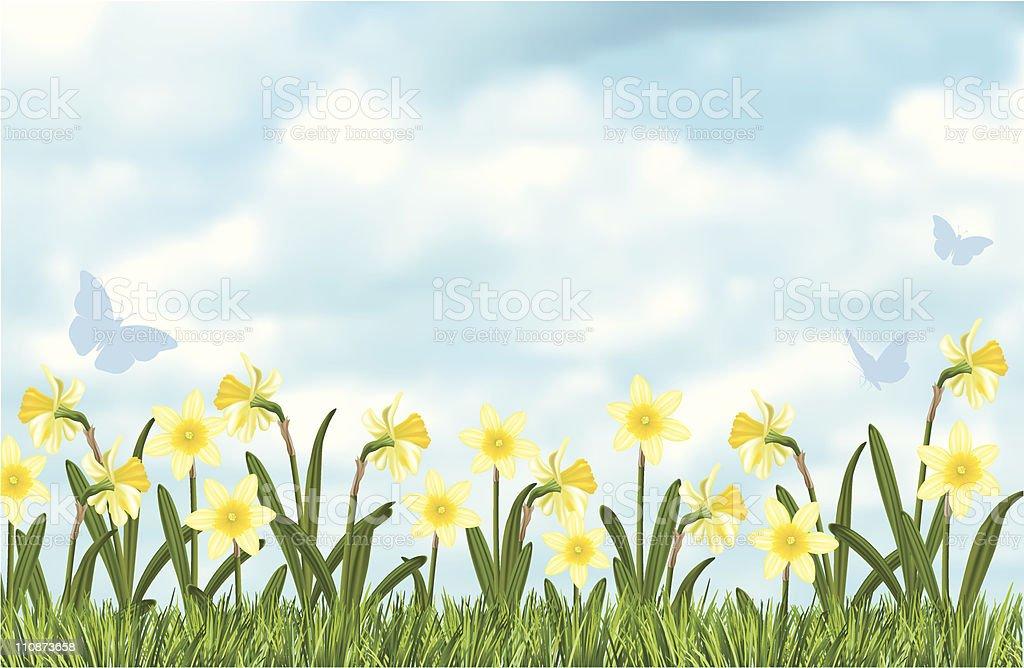 Blue Sky Daffodils Border vector art illustration