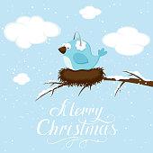 Blue winter bird