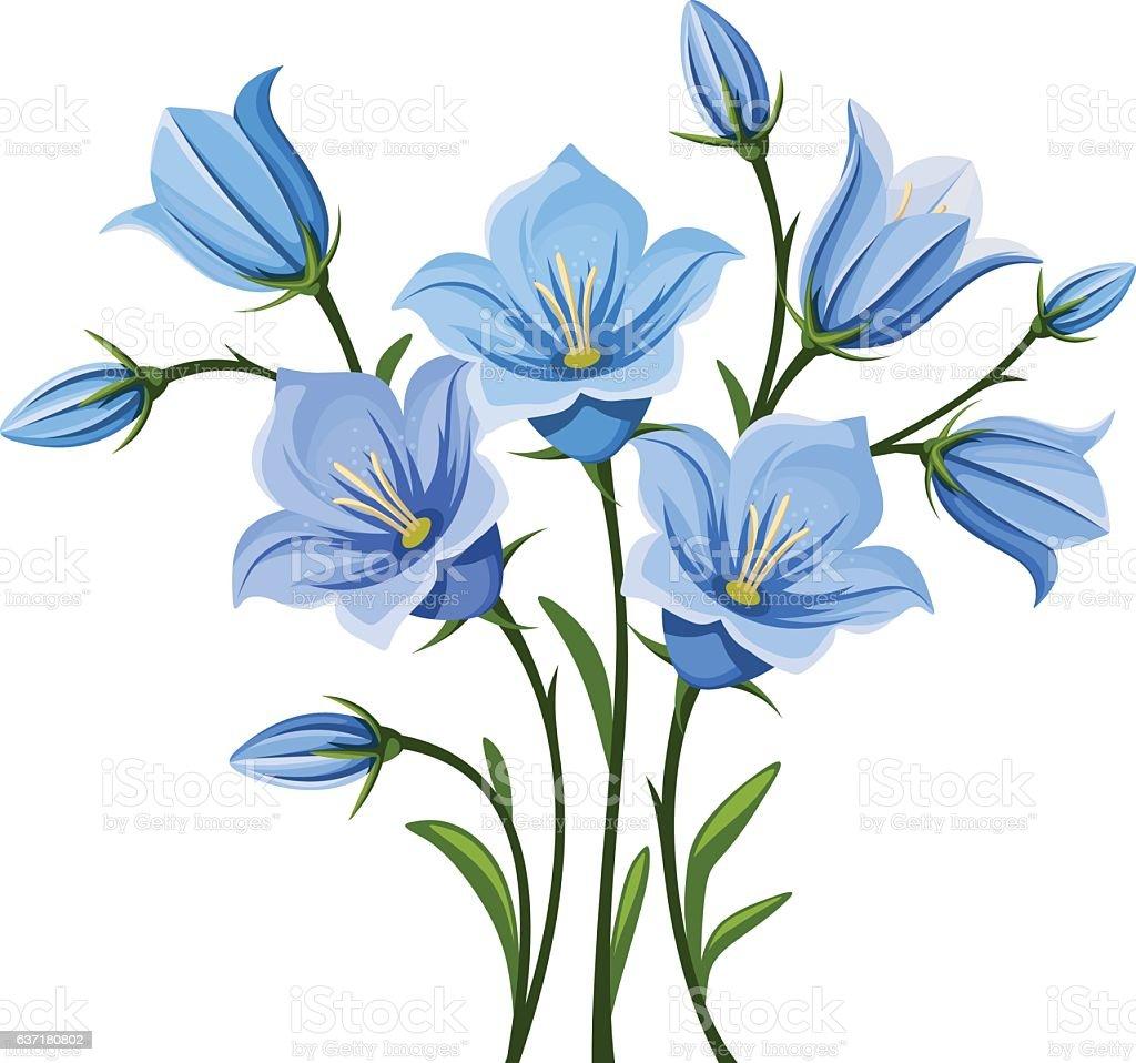 Bluebell flowers. Vector illustration. vector art illustration