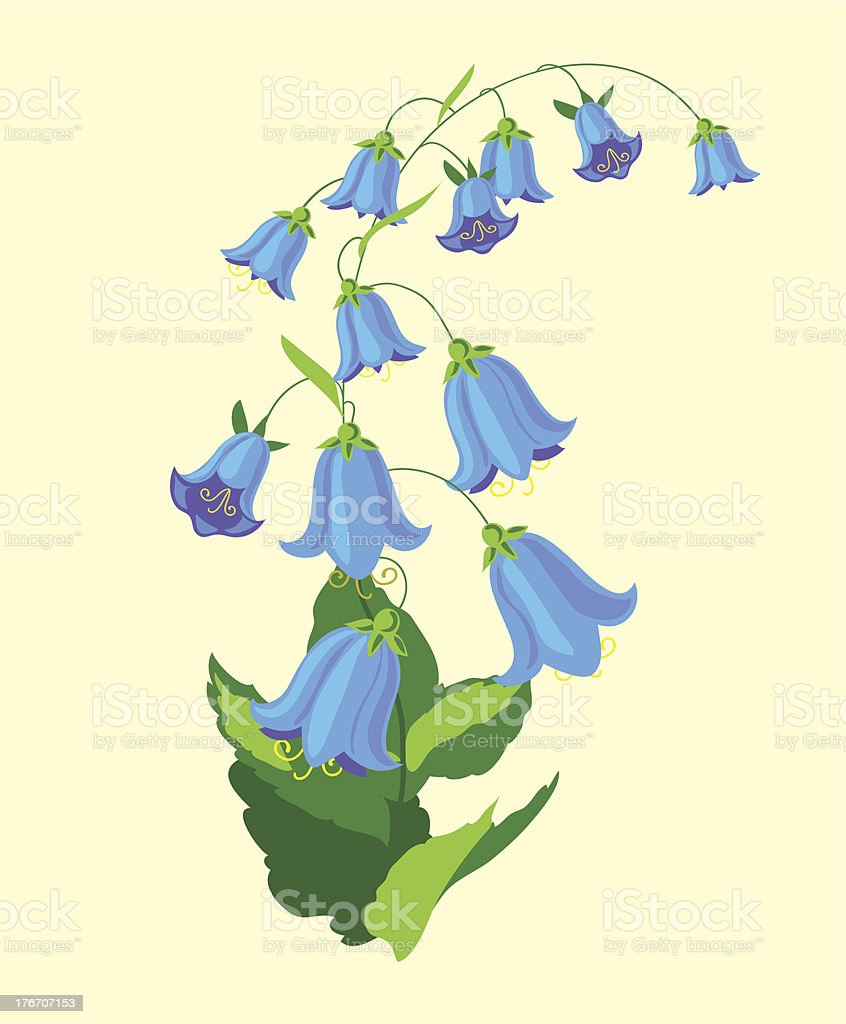 bluebell royalty-free stock vector art