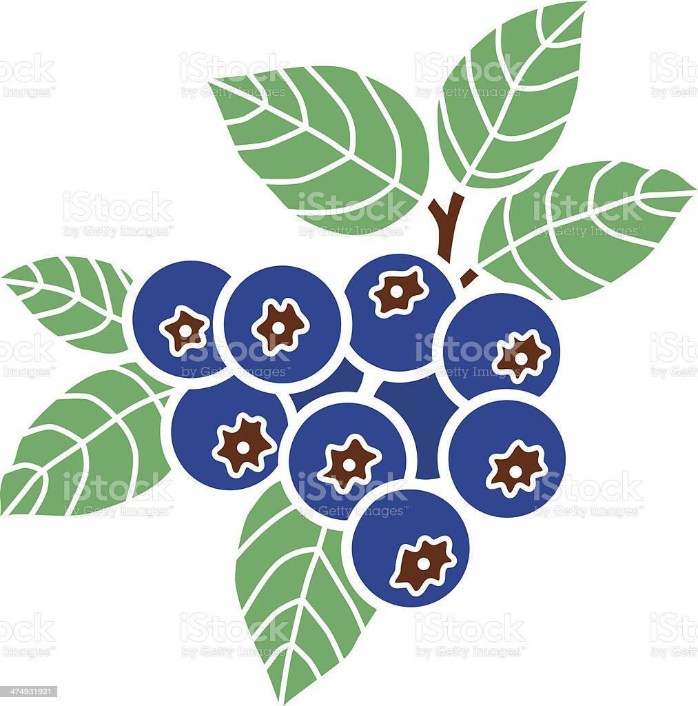 blueberries in color vector art illustration