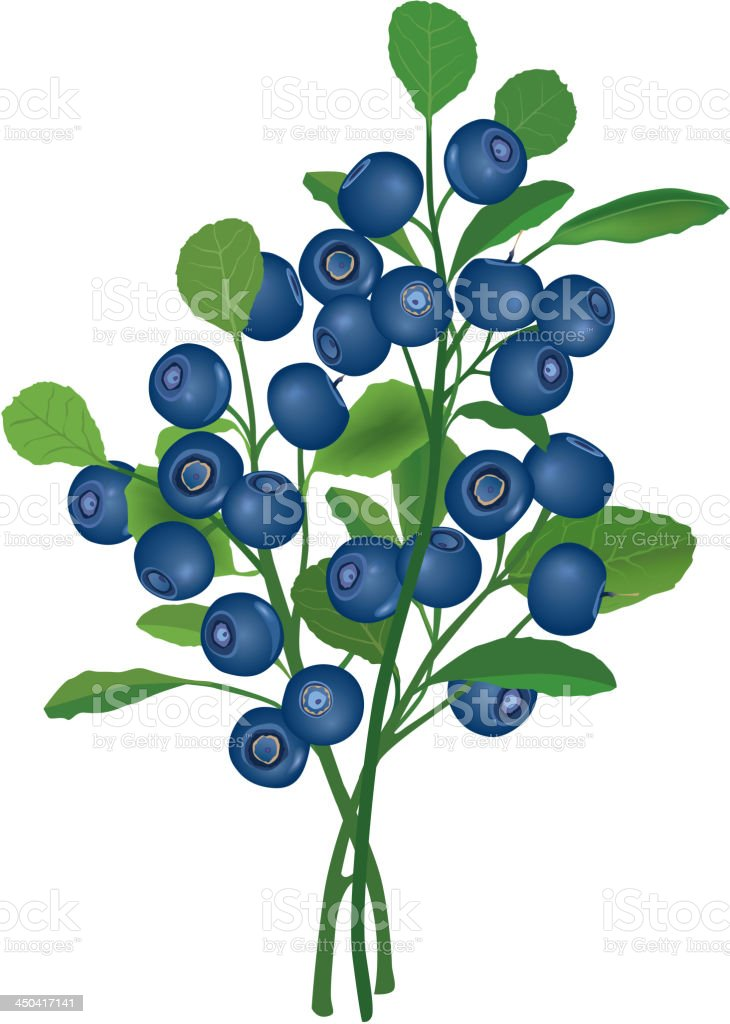 Blueberry branch royalty-free stock vector art