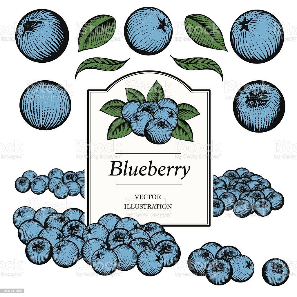 Blueberry vector art illustration