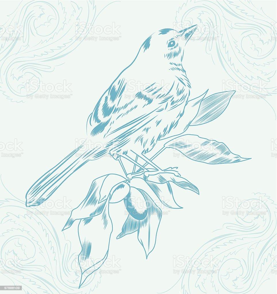 Bluebird vector art illustration